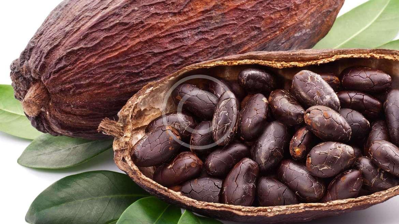 Сортиране на какаови зърна